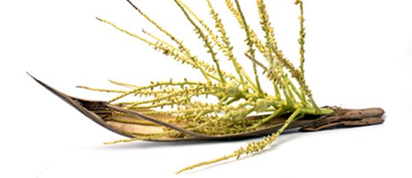 kokosbluetenzucker-bio